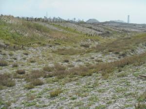 砂丘が草原に