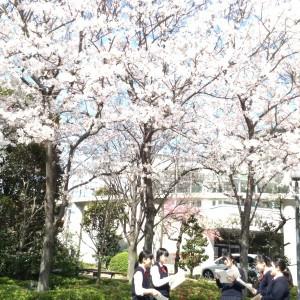 桜の前で練習です。